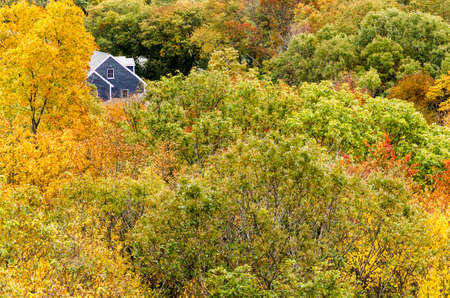 A house peeks out above the treetops.
