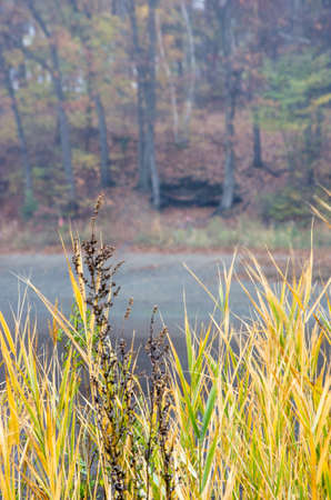 Grasses and trees around a tidal lake.