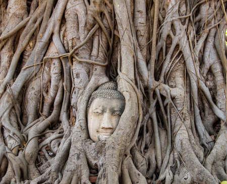 Head of Buddha at Wat Mahata in Ayutthaya, Thailand