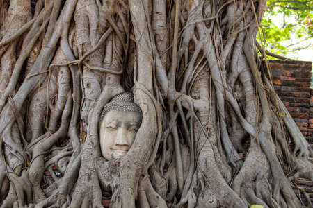 Buddha-Kopf im Wat Mahata in Ayutthaya, Thailand Standard-Bild