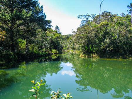 Green natural habitat at Tsiribihina river in Madagascar Stock Photo