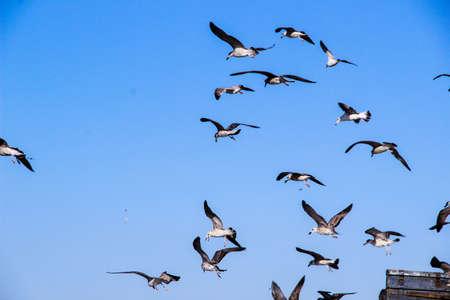 Lots of Seagulls fly freely clear blue sky in Istanbul, Turkey Standard-Bild