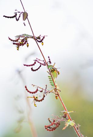 wasp: avispa