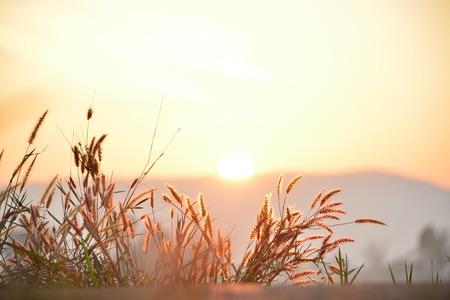 Sunrise Imagens