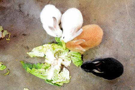 murk: rabbit