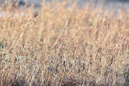 mujer mirando el horizonte: La peque�a hierba y bokeh