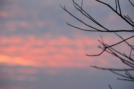 Sunset behind the trees in the winter photo