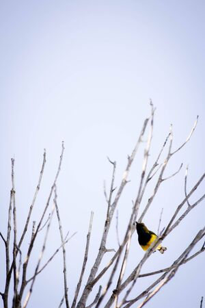 parus: Birds on branches and sky background