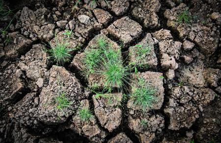 Green grass on dry ground