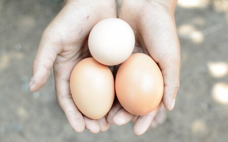 keep out: Fresh eggs from the coop to keep out of hand