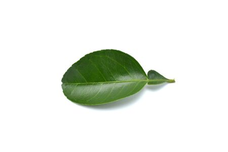 pomelo: Pomelo leaves isolated on white background
