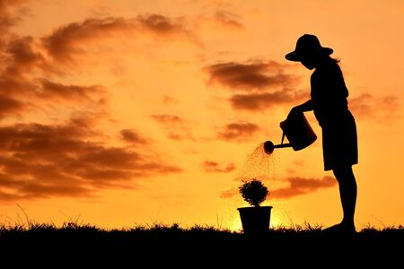 Silhouette women watering a tree at sky sunset. Concept saves the world