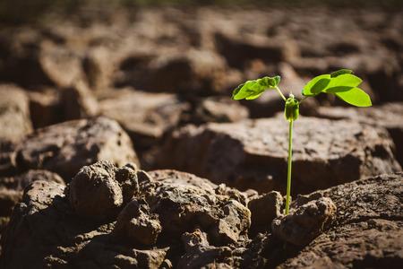 Pequeña planta verde en la tierra seca de la grieta, sequía del concepto