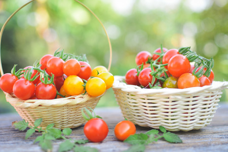 tomate de arbol: Tomato in basket on wood from Thailand selective and soft focus