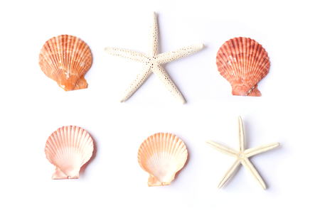 Group of shell on white background