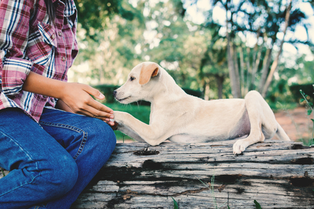 Happy girl playing with little dog in nature background, travel on holiday color of vintage tone and soft focus Stock Photo
