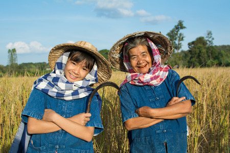 Old woman farmer and granddaughter working at rice field on harvest season, selective and soft focus