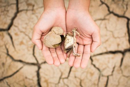 Vista de cima das mãos segurando carcaça de caranguejo em chão seco de crack, seca de conceito