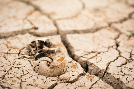 Carcaça de casca no chão seco e seco, seca do conceito