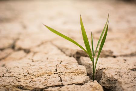 Pequena planta verde em terreno seco e seco, seca conceitual Banco de Imagens