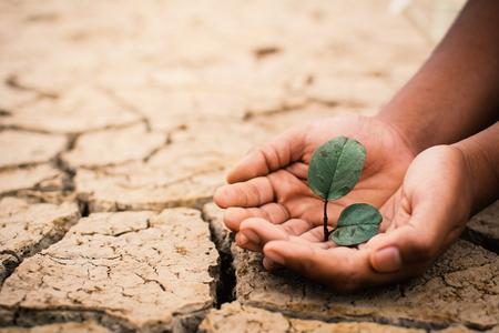 Mãos do menino salvam pouca planta verde em terra seca quebrada, conceito de seca e ambiente de crise Banco de Imagens