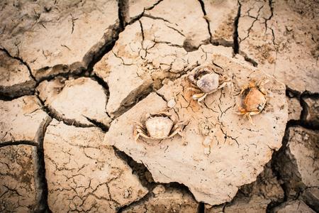 螃蟹在裂縫乾地面,概念乾旱的屍體 版權商用圖片