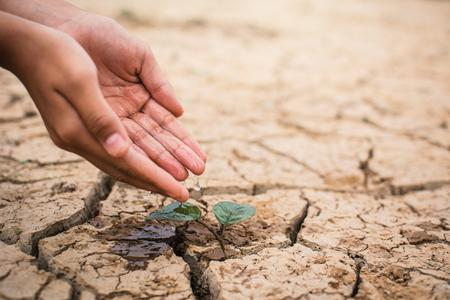 Mãos de menino molhando pequena planta verde em chão seco e crack, conceito de seca e salve o mundo