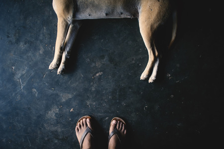 Top view feet woman with the dog sleeping on loft floor Reklamní fotografie