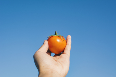 Female hand holding fresh tomato and blue sky background