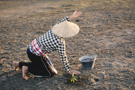 Asian man planting little green plant on cracked dry ground, concept drought and crisis environment and pray for the rainy,selective and soft focus Stock Photo