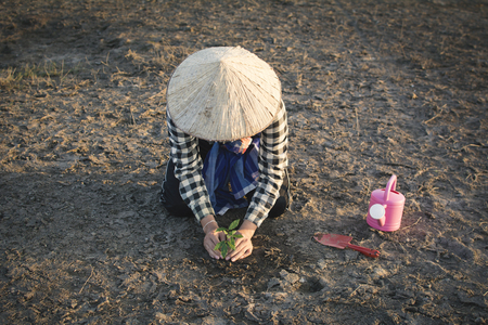 Asian man planting little green plant on cracked dry ground, concept drought and crisis environment,selective and soft focus