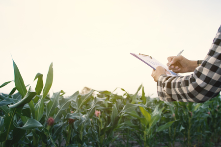 A man holding paper checking on farm Stock Photo