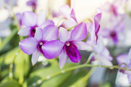 Beautiful purple orchid selective and soft focus Stock Photo