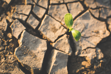 Little green plant on crack dry ground, drought concept 스톡 콘텐츠