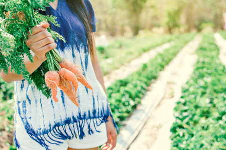 Woman hand holding fresh carrot in garden