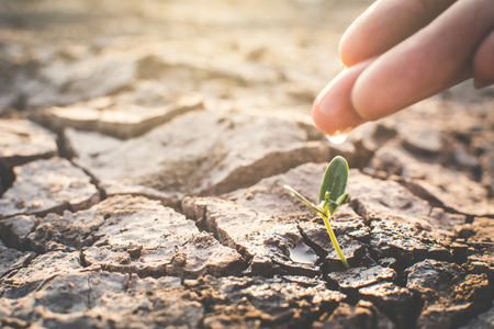 Human hand watering little green plant on crack dry ground, concept drought and save the world