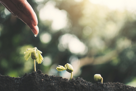 Human hand watering little green plant , concept saving environment.