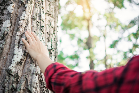 Human touching big tree color of hipster tone selective soft focus, concept protect environment