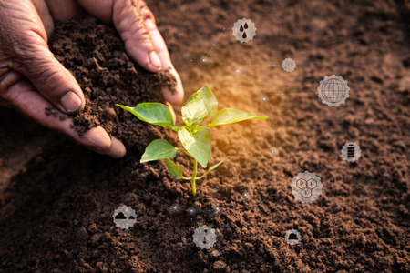 Old hands planting a green sprout in soil ground with icon about environment on image , Protecting and saving the pure nature in the world concept.