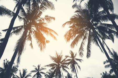 La palmera en el color de la isla de la vendimia con la luz del sol.
