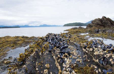 Barnacles appear during the shallow and low tides waters Imagens