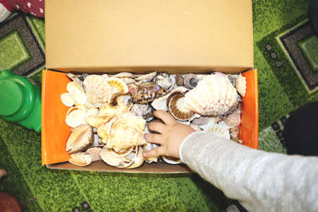 Thematic occupation in the kindergarten on the theme of the sea. Sea shells and shellfish in a close-up box