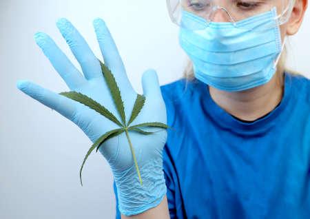 Doctor scientist holds a leaf of hemp in his hands. Wild hemp studies - Cannabis ruderalis. The use of narcotic herbs in medicine Zdjęcie Seryjne