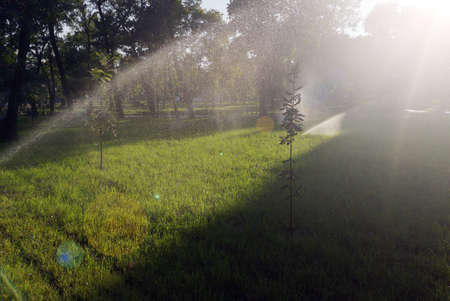 In the park, a sprinkler is watering the lawn. Automatic lawn watering on a sunny day