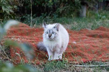 A frightened cat looks with bulging eyes in the direction of danger. The kitten white fur stood on end. Homeless animals protection concept