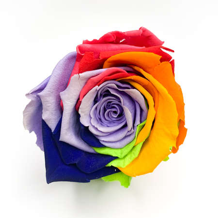 7 806 Rainbow Rose Stock Photos And Images 123rf