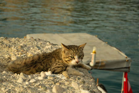 Close up of gray tabby cat with green eyes lies on a rock near the sea and waiting for fish in port of Antalya old town Kaleici on a sunny day. Stock image.
