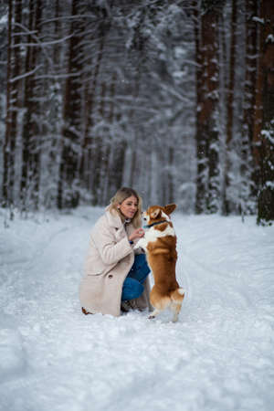 Young blonde female is playing with her welsh corgi pembroke in a winter snowy forest. Stock Photo