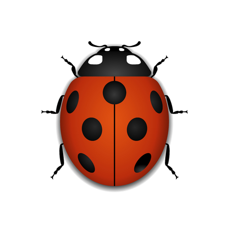 Ladybug small icon. Red lady bug sign, isolated on white background. 3d volume design. Cute colorful ladybird. Insect cartoon beetle. Symbol of nature, spring or summer. Vector illustration