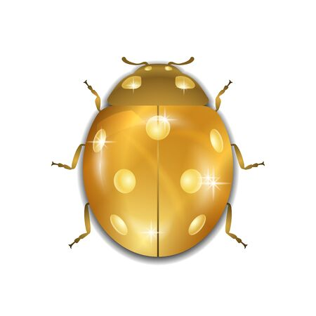 antennas: Ladybug gold insect small icon. Golden metal lady bug animal sign, isolated on white background. 3d volume bright design. Cute shiny jewelry ladybird. Lady bird closeup beetle. Vector illustration